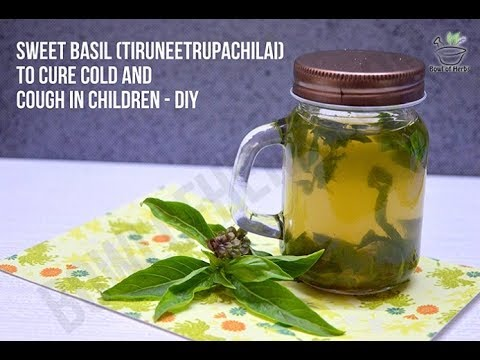 Sweet basil for respiratory disorders in children - Home remedy