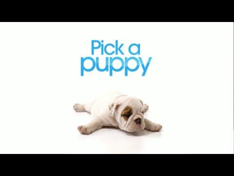 Pick a Puppy - Season 1, Episode 6