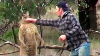 Man Punches Kangaroo To Save Dog | What's Trending Now