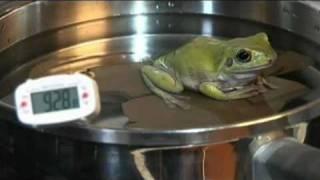 Boiling Frog Experiment, Say goodbye to Pepe the Frog, Sayonara Pepe
