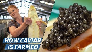 How Russian Sturgeon Caviar Is Farmed and Processed — How To Make It