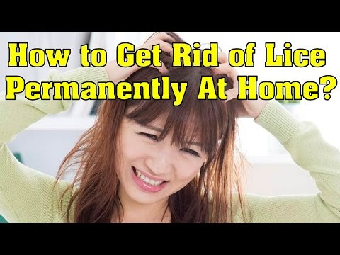 How to Get Rid of Lice Permanently At Home