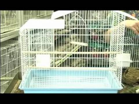 Keep Your Parakeet Happy : House Your Parakeet in the Right-Sized Cage