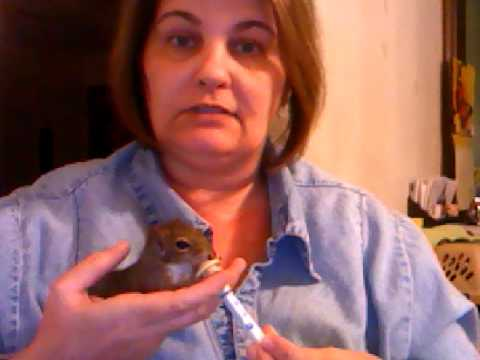 How to Feed a Baby Squirrel / MNR
