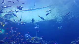 Peaceful aquarium fishes in San Francisco