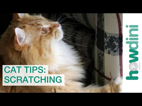 Cat Scratch Tips: How to Stop Your Cat from Scratching