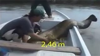 #x202b;لحظة اصطياد حورية البحر حقيقية وحية صورتها عدسات الكاميرا !!#x202c;lrm;