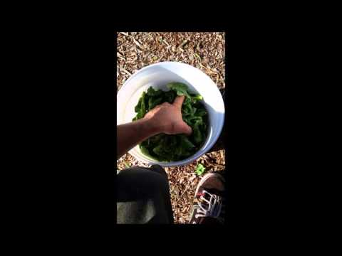 FPJ- Fermented Plant juice