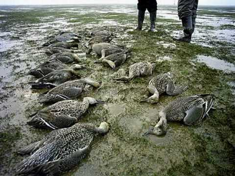 Please Please,,,don't pollute the water again...they are so weak!!!