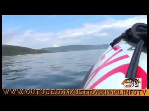 Mississippi River Bull Sharks Nature Documentary FULL HD 2014