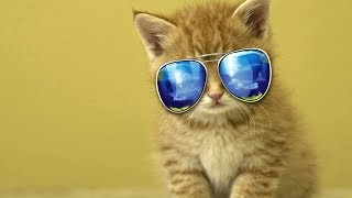 Funny Cats Wearing Glasses Compilation 2014 mp3
