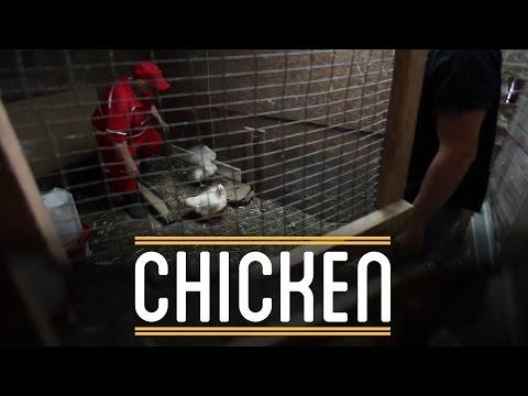Chicken | How to Make Everything: Sandwich (7/12)