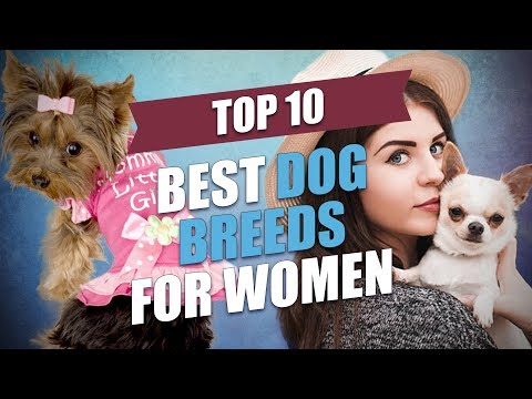 Xxx Mp4 Top 10 Best Dog Breeds For Women 3gp Sex