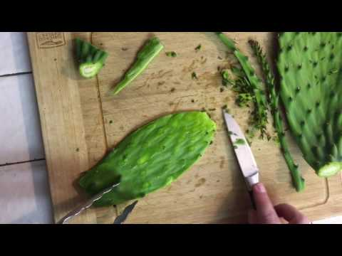 Eating a Cactus Pad? How to clean spines off of an Opuntia Cactus Pad (Prickly Pear) for eating.