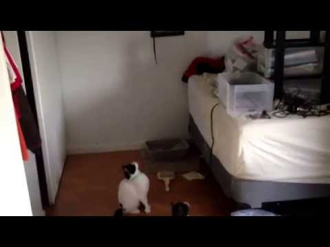 How to keep cats Entertained for hours