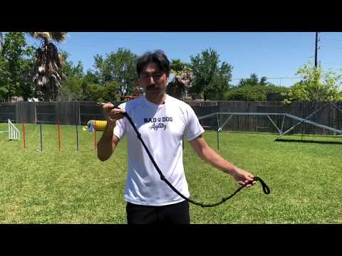 How to Leash Tug with Your Agility Dog