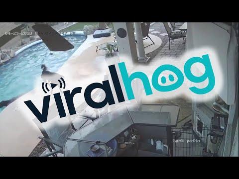 Dog Jumps in Pool to Save His Friend    ViralHog