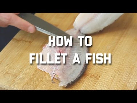 HOW TO FILLET A ROUND FISH STEP by STEP