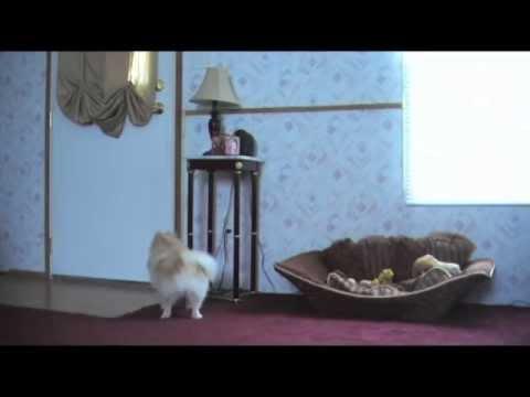Hidden Camera - Dog home alone
