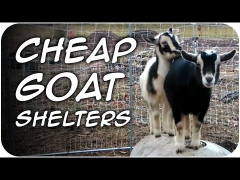 CHEAP Goat Shelters for Winter DIY (40)
