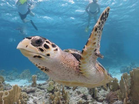 Caribbean | Lesser Antilles | Bonaire (Divers Paradise)