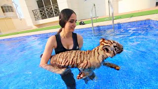 Swimming with BABY TIGERS !!!