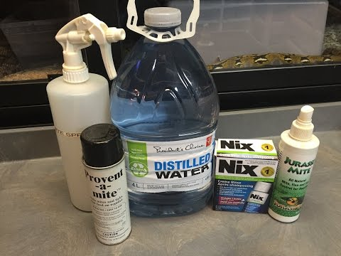 Snake Mite Treatment and Prevention