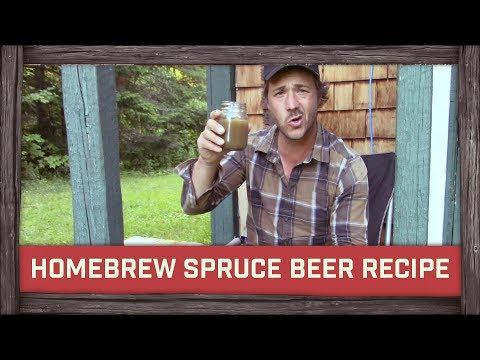 Homebrew Spruce Beer Recipe!