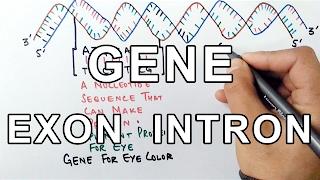 What is a GENE ? A Molecular Approach
