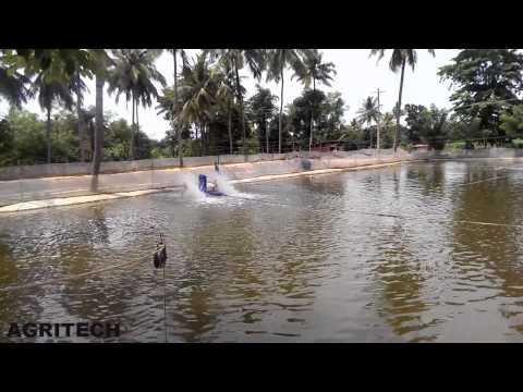 Small scale fish farming in india | Tilapia Rohu Grass Carp | Aquaculture
