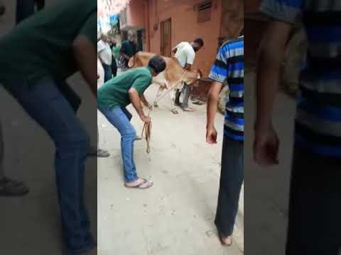 Xxx Mp4 Dangerous Cow 3gp Sex