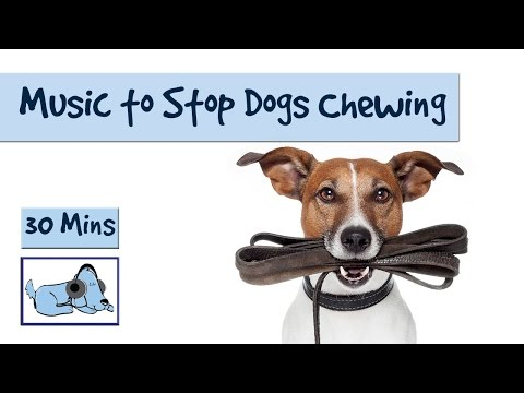 Relaxing Dog Music - Music to Stop Your Dog from Chewing and Other Destructive Behaviours
