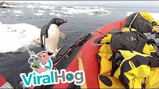 Penguin Jumps on Board Research Boat to Say Hello || ViralHog