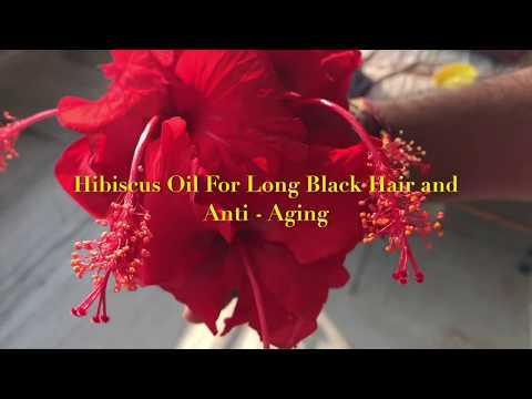 Get Long Hair, Silky Hair, Black Hair with Homemade Organic *Hibiscus Hair Oil*  | DIY