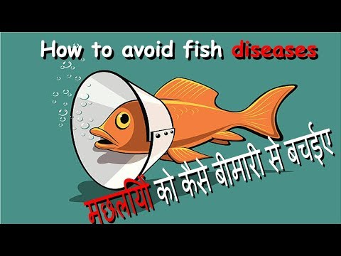 How To Aviod Fish Disease in Hindi || Keep your fishes healthy
