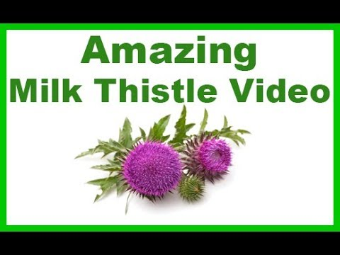 All You Need to Know About the Amazing Milk Thistle Plant, Uses, Benefits and Side Effects!