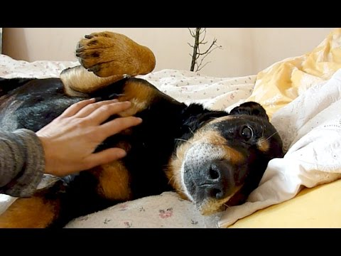 Old Shelter Dog Rescued Feels Love & Kindness For The First Time - Howl Of A Dog