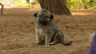 BEWARE Very Fierce Dogs | This Wild Life | BBC