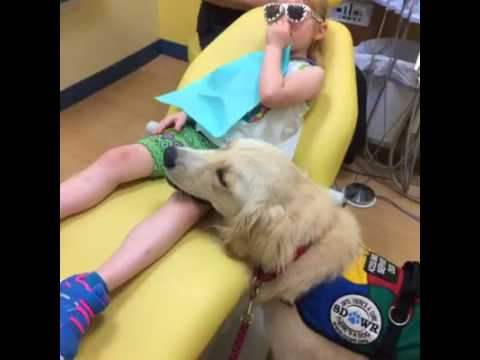 service dog visits dentist