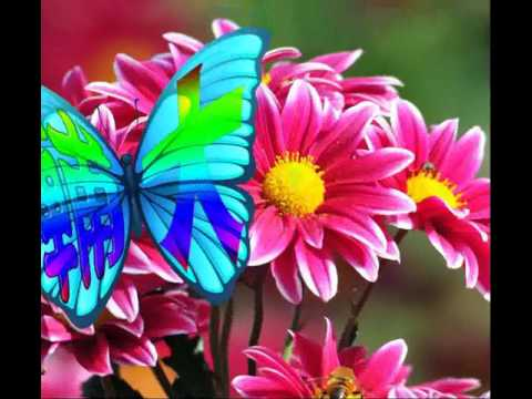 Butterfly gif animation