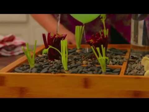 Gardenista + Bounty: Sprouting Seeds & Compost Garden