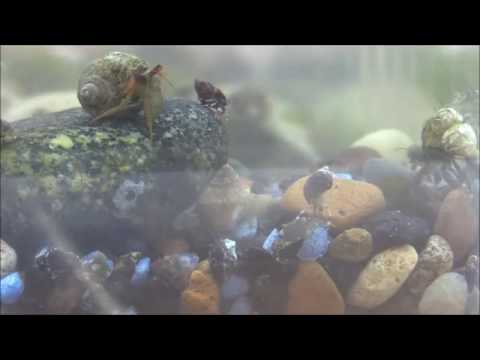 A lot of small hermit crabs in fish tank for science observation