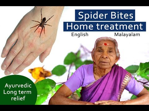 Spider bites, treatment, home remedies, ayurvedic long term relief ( English malayalam )