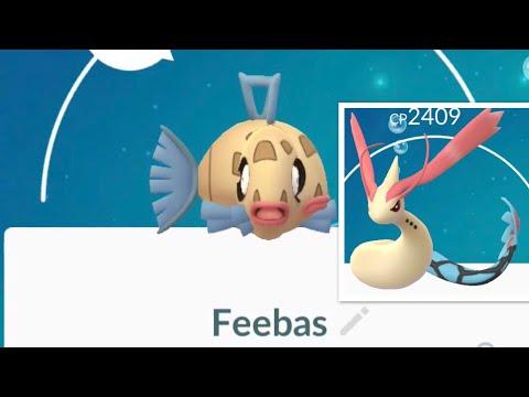 Glitch/Bug When Evolving Buddy -  Feebas To Milotic In Pokemon Go