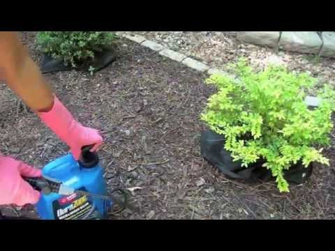 Yard Cleanup - Weed and Bug Control - Ep5 part2