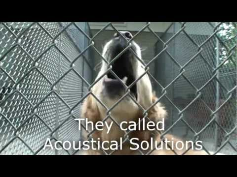 Dog Kennel Quieted by AlphaSorb Acoustical Panels