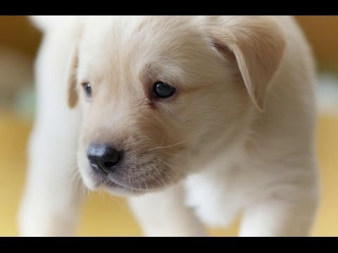 Puppy opens its eyes for the first time | Puppy Senses | Secret Life of Dogs | Earth