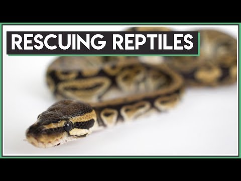 Rescuing New Reptiles + Big Announcement!