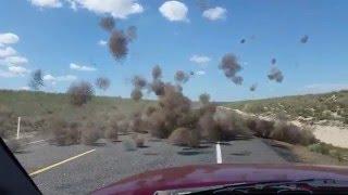 Tumbleweed Dust Devil!
