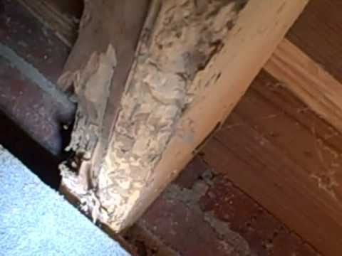 Charlotte Home Inspector Finds Old House Bores